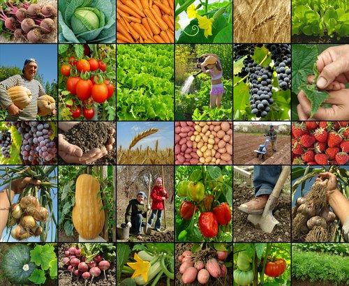 taxe-agricultura